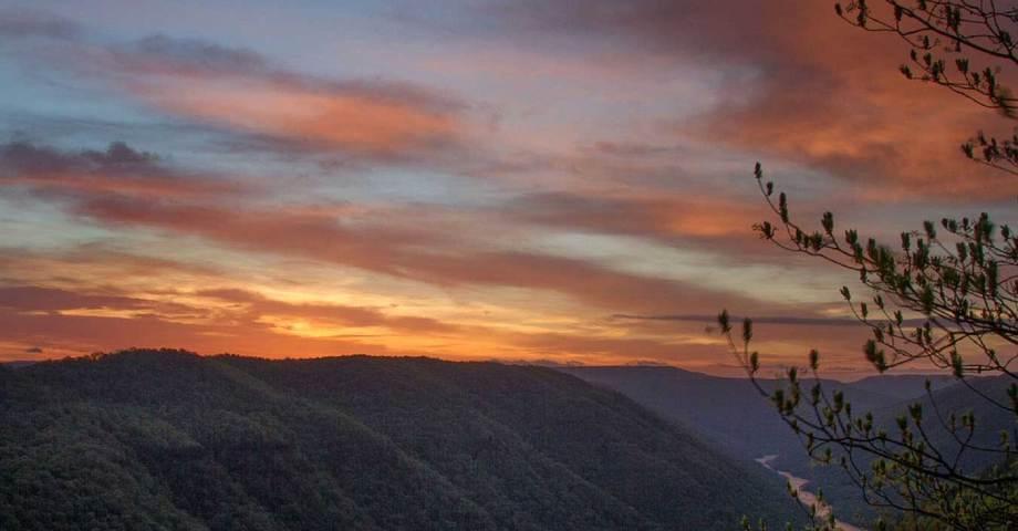 Monongahela national forest dog pet info