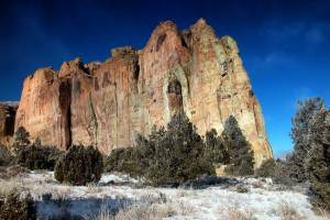 dog info and rules el morro national monuments