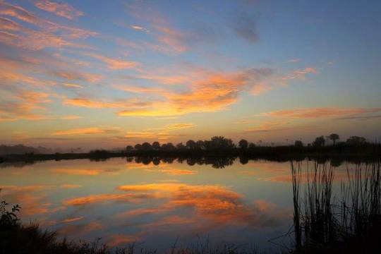 dog info and rules big cypress national preserve