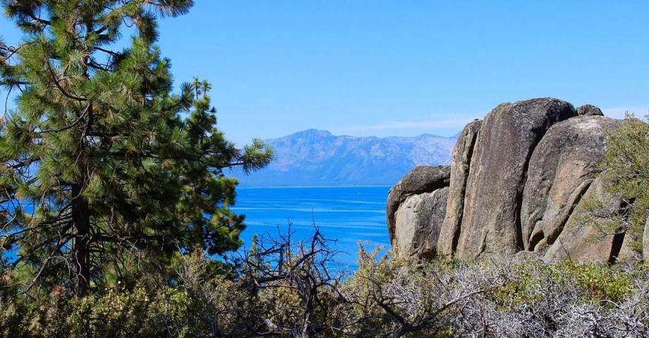 lake tahoe pet dog info