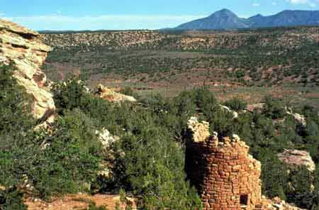 canyons of ancients dog info