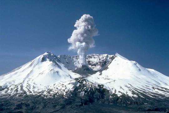 mount saint helens dog info