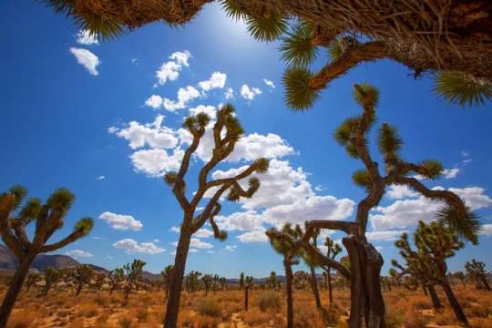 national-park-paws-joshua-tree-desert-keep-dog-cool