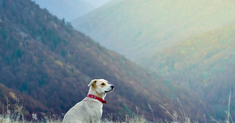 5 national parks and their dog friendly neighbors where can i take my dog to a national park?