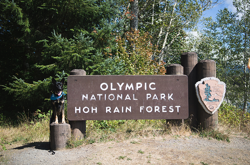 olympic national park bark ranger rules and helpful info from miloshepski