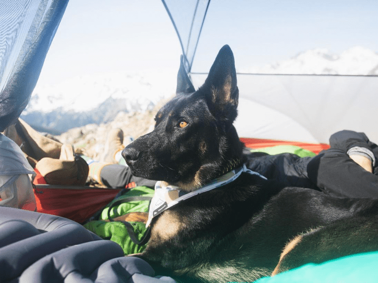 10 hiking and camping tips with your dog