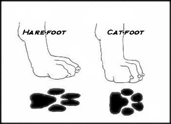 Cat Feet on a Dog (a quiz)