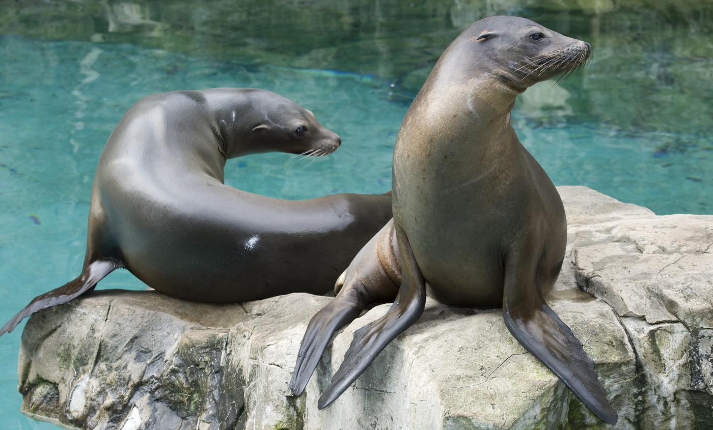 Dare To Compare What S The Difference Between Sea Lions And Seals Smithsonian S National Zoo