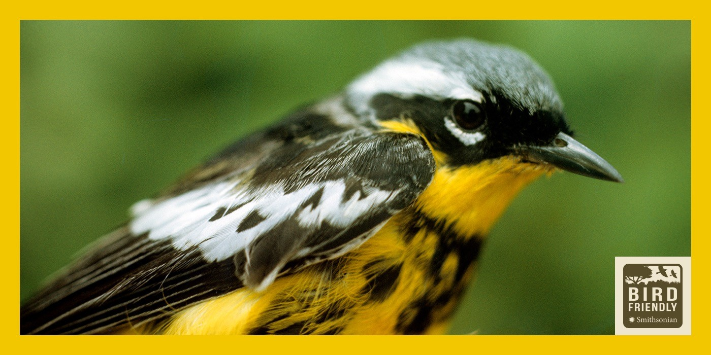 Birds Beak Supports
