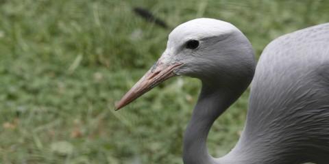 stanley crane smithsonian s