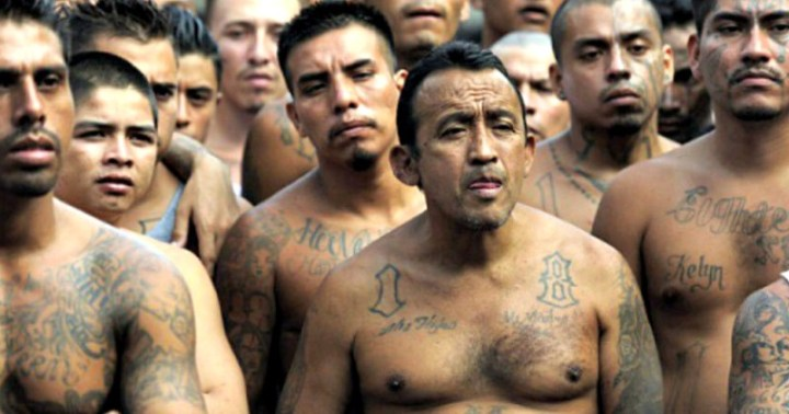 MS-13 GANG MEMBERS AMONGST 'MIGRANT CARAVAN'