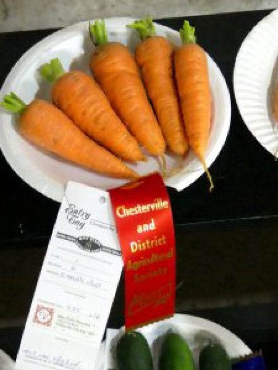 First-prize-winning carrots. Zandbergen photo, Nation Valley News