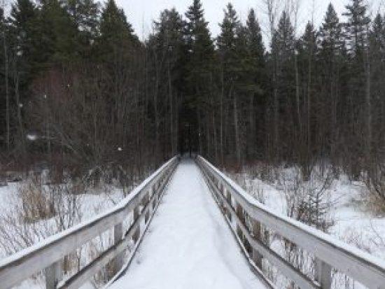 The Warwick Trail's highlight boardwalk overlooking a wetland. Zandbergen photo, Nation Valley News
