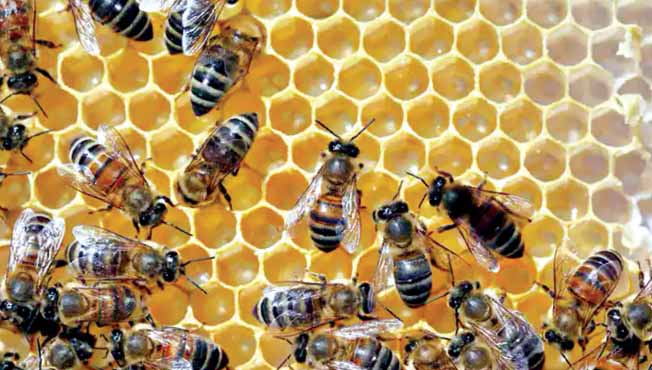 The number of bees is declining  Leader