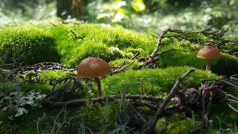 hongos-musgos