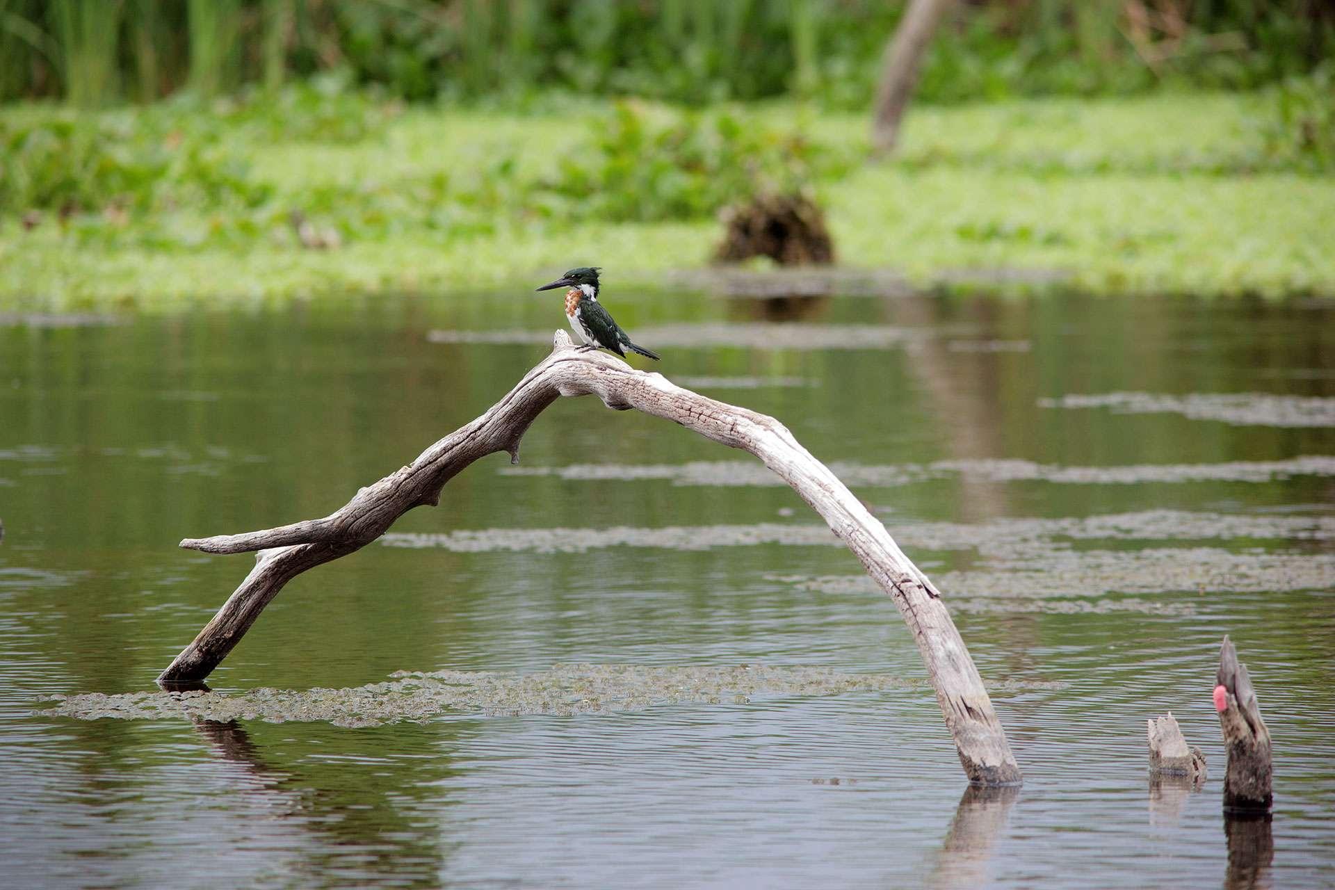 Programa Eco-regiones Sostenibles y de Conservación