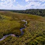 Se crea el Ñembi Guasu: La segunda área de conservación más grande en el Gran Chaco americano