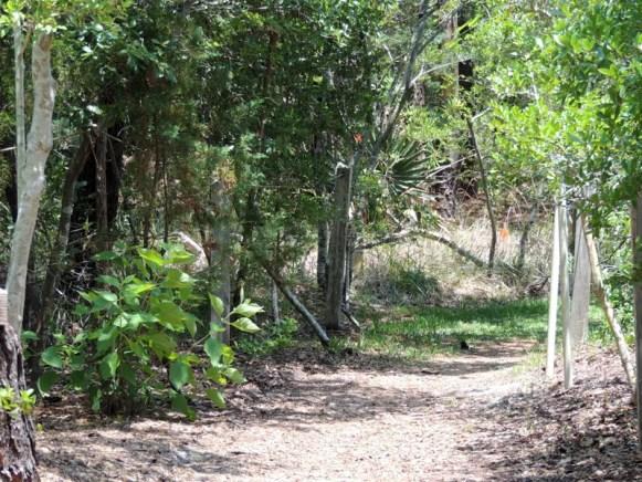 Trail14017