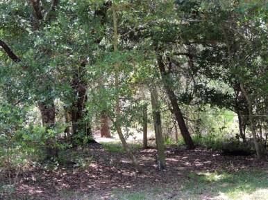 Trail14031