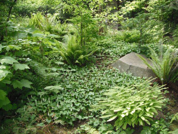native plants pnw encyclopedia
