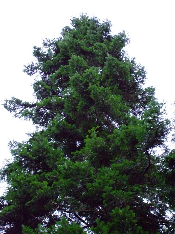 Grouse Forest Washington