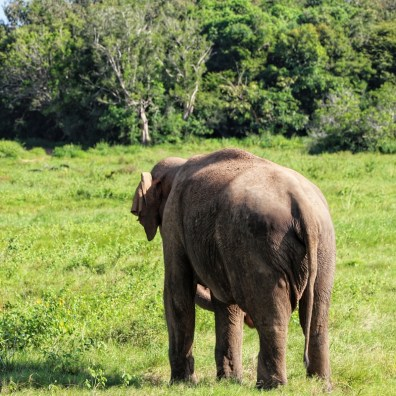 Elephant-Safari-NatnZin