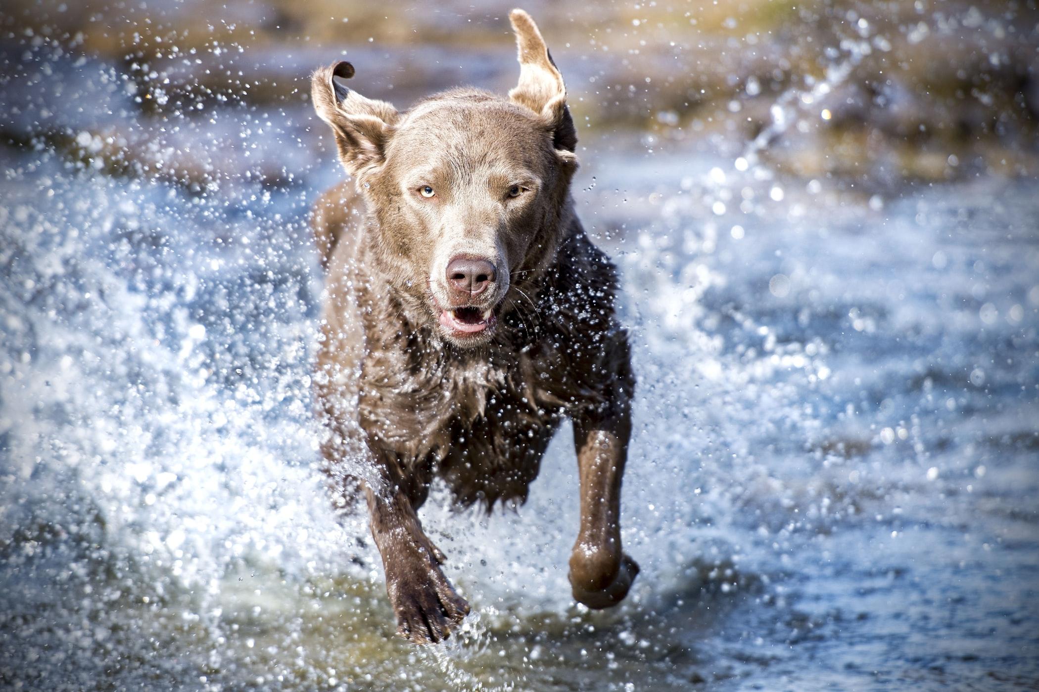 NatrixOne Dog Running