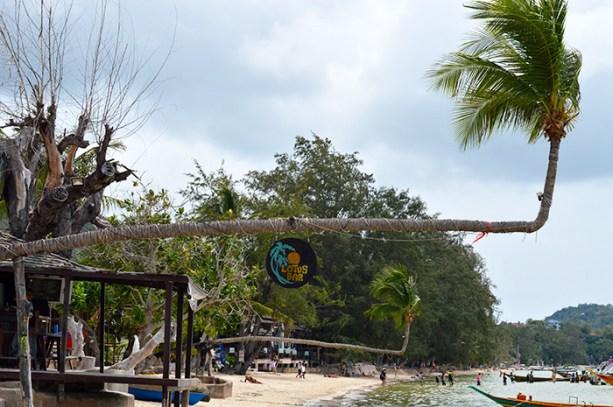 Lotus Bar - Koh Tao Thailand