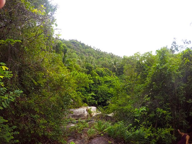 Jungle Hike