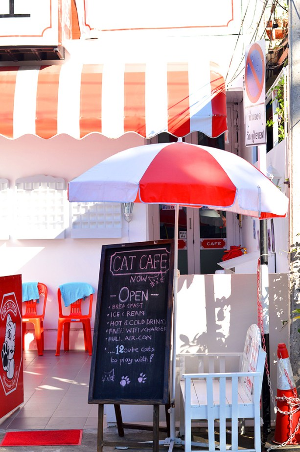 Cat Cafe in Nimman Chiang Mai