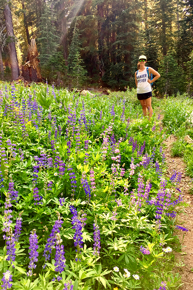 hiking in the wild flowers