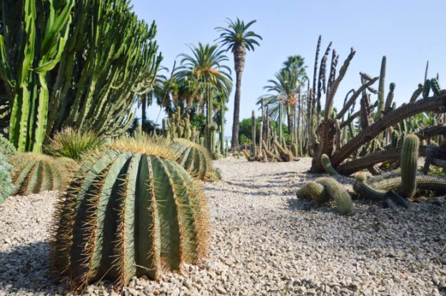 cactus garden - Mossen Costa i Llobera Gardens