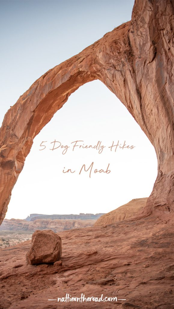 5 Dog Friendly Hikes in Moab