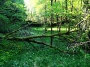 Hope-skogen3
