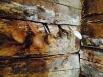 Skjeer i veggen (Foto: Tone Loeng)