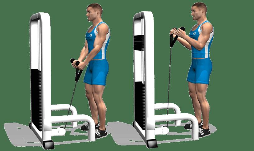 Exercice musculation bras curl la corde - La chaise exercice musculation ...