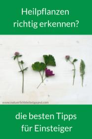 Heilpflanzensichererkennen (1)
