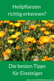 Heilpflanzensichererkennen (3)