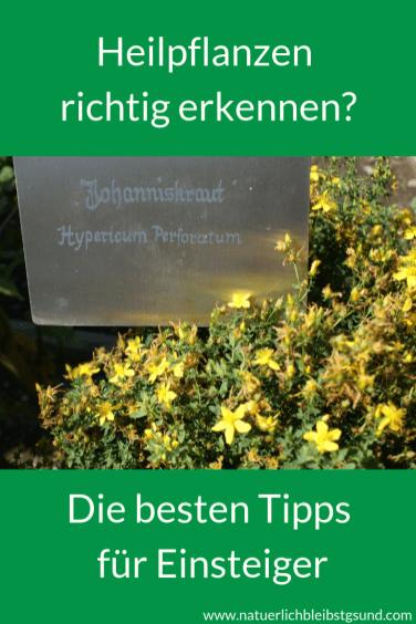Heilpflanzensichererkennen (8)