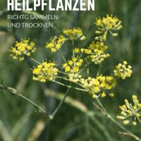 Heilpflanzen richtig sammeln und trocknen: