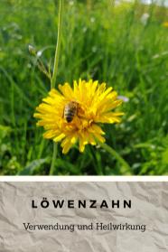 Löwenzahn2