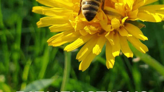 Bienenstich erste Hilfe