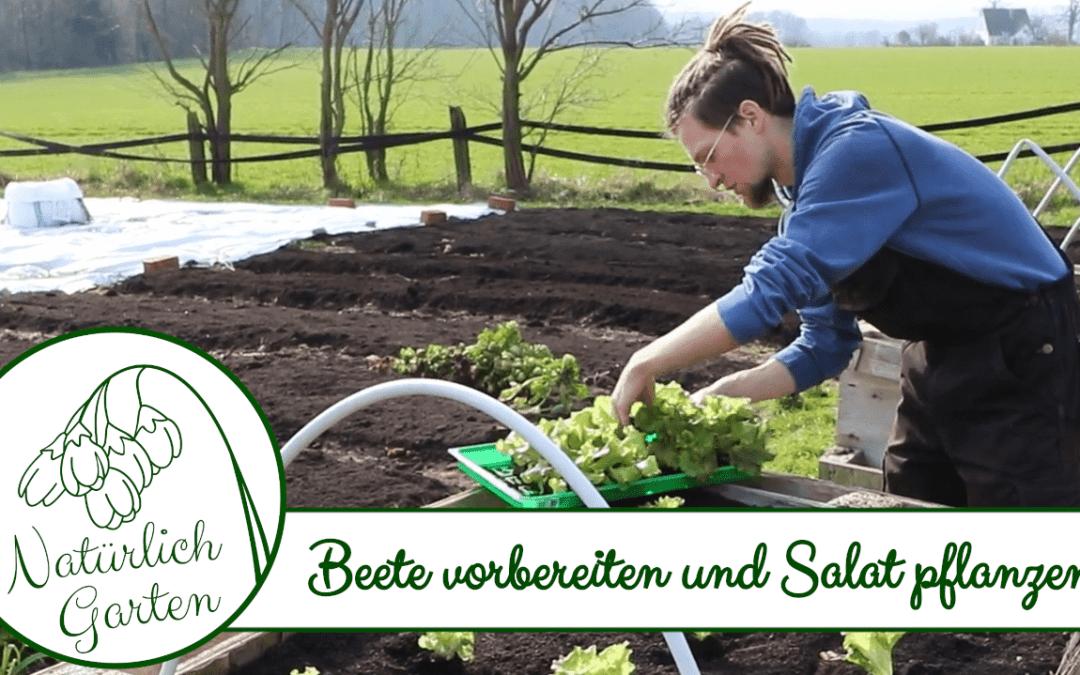 No Dig Beete vorbereiten und Salat pflanzen