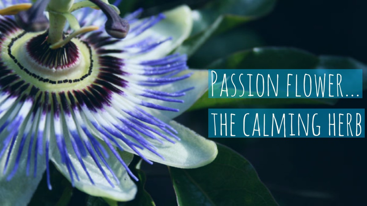 Stay Calm and Relax with Passion Flower