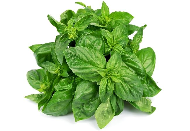 Medicinal Benefits Of Basil Leaves