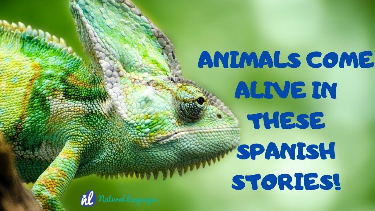 Spanish Quiz for Beginners