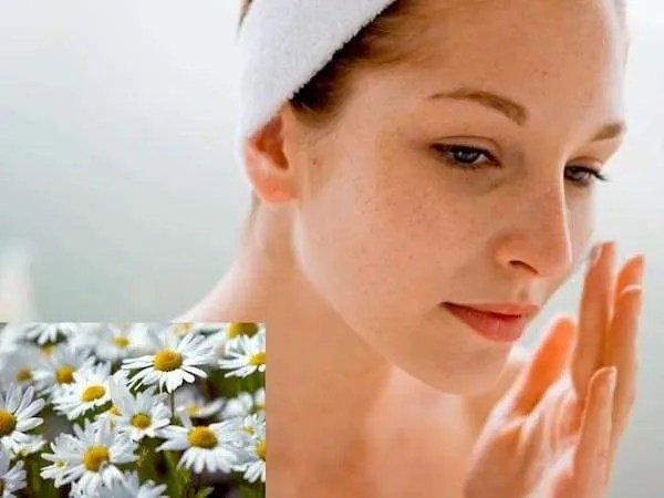 Chamomile Face Mask At Home Recipes