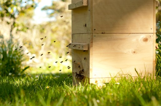 Bees returning from foraging