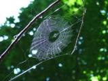 Webnet (Highland)