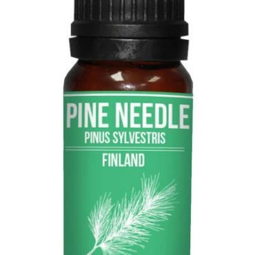 Pine needle essential oils Pinus sylvestris properties and buy online